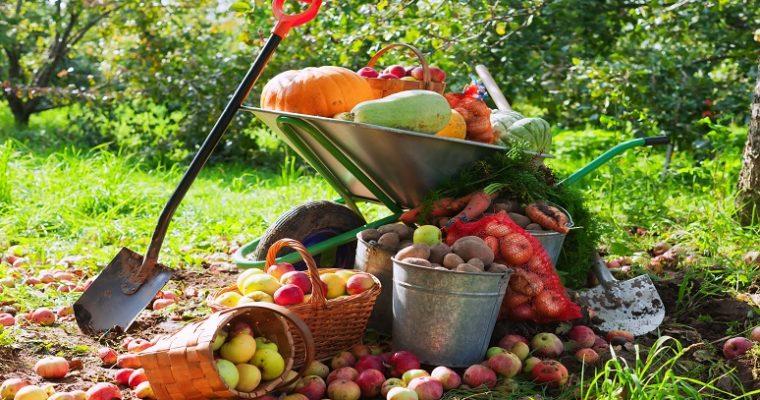 Co potřebuje zahrada v říjnu