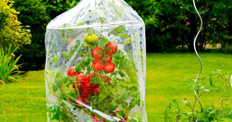 Na co v srpnu na zahradě nezapomenout?